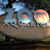 Visita allo Zoo Aquarium di Madrid