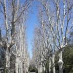 viale-dei-platani-giardini-del-palazzo-reale-campo-del-moro-madrid.jpg
