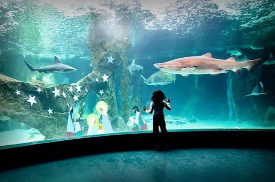 Madrid-Aquarium-Zoo